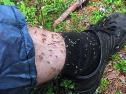 Защита от комаров на рыбалке